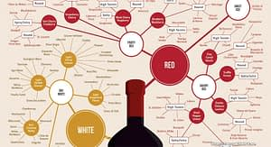 An Introduction to Classifications of Wine
