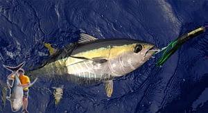 Fishing for Yellow Fin Tuna